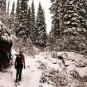 Hil Snow Trees