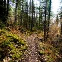 Moss Trail