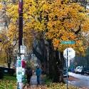 Portland Fall
