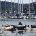 Many Seals