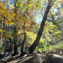 Mist Trail 3