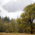 Leidig Meadow