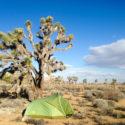 Tent Spot