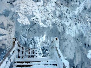 Geyser Frost
